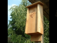 Small Cedar Bat House with Artwork