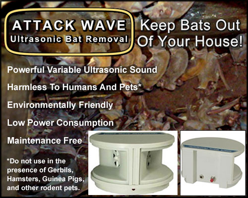 Attack Wave Indoor Ultrasonic Bat Removal