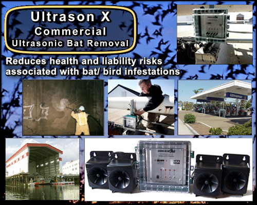 Commercial Bat Removal Ultrason X