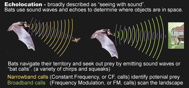Bats and Sonic Navigation