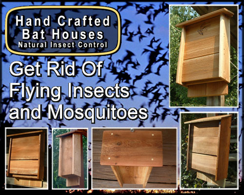 Bat Removal - Hand Crafted Bat Houses