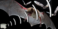 Let Us Solve Your Bat Problems Bat Removal Safe